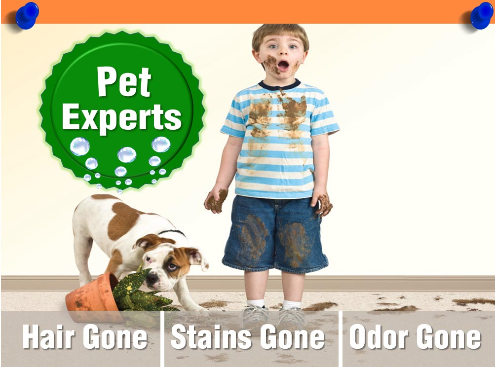 Pet Stain and Odor Removal Carpet Cleaning